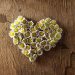 Heart arrow chamomile wallpaper