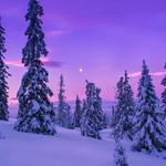Winter, mountains, snow, trees, dawn landscape desktop wallpaper