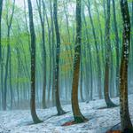 Tokamachi, beech forest near japan, landscape wallpaper