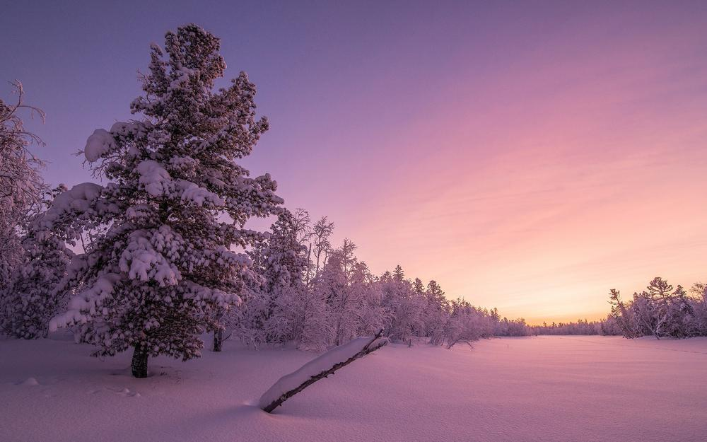 Winter thick snow forest sky landscape wallpaper