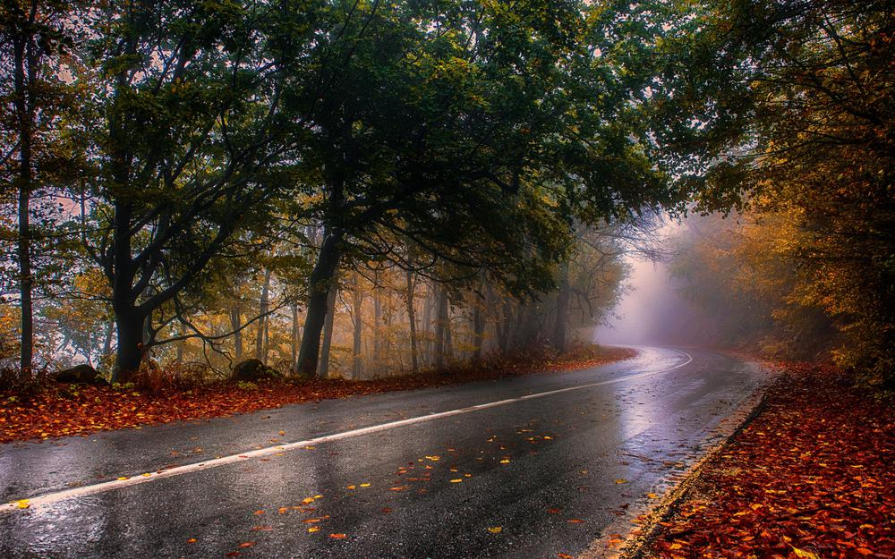 Fog, road, tree leaves, autumn, forest, landscape desktop wallpaper