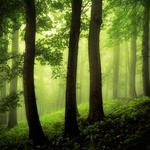 Forest, fog, leaves, trees, grass, natural scenery computer wallpaper