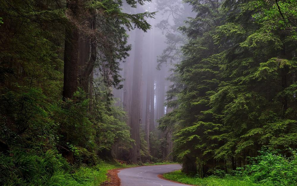 California national park, redwood forest, road, fog, landscape desktop wallpaper