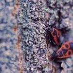 Insects, creep, wood, bark, surface