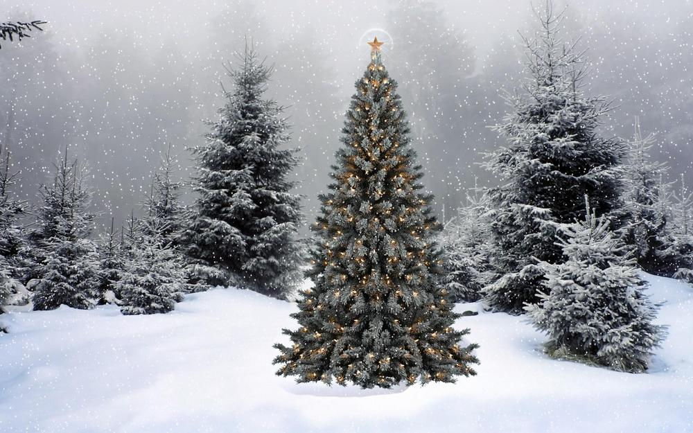 Forest, trees, garland, star, new year, snow, winter