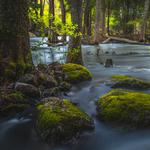 Forest, trees, river, rocks, moss, natural scenery desktop wallpaper