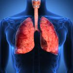 Respiratory tract, lungs, human body