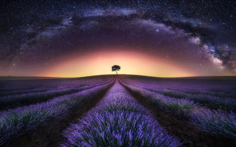 Night, fields, stars, sky, lavender, milky way, landscape desktop wallpaper