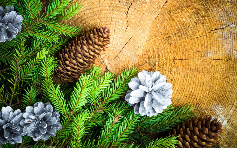 Spruce branches checker new year