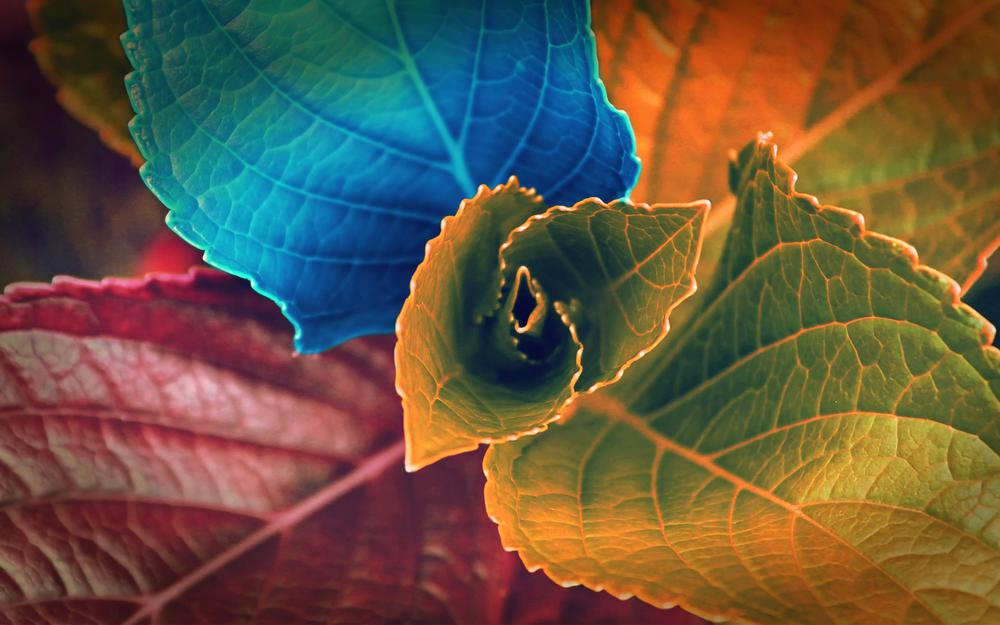 Leaves, colors