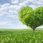 Love tree, love, romance, heart, tree, green field, desktop wallpaper