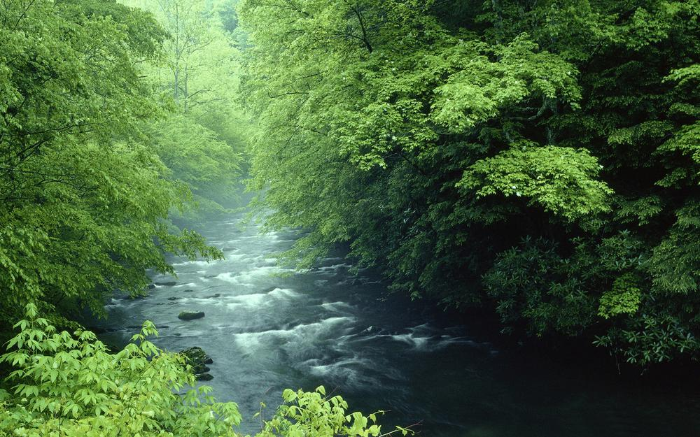Green scenery forest creek eye protection nature desktop wallpaper