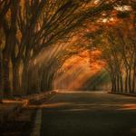 Autumn trees road sunshine park landscape desktop wallpaper