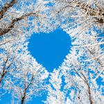 Winter, trees, branches, sky, love, snow, beautiful scenery desktop wallpaper