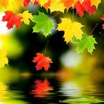 Autumn leaves water reflection maple leaves desktop wallpaper
