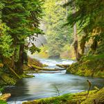 Trees, forest, river, moss, natural scenery desktop wallpaper