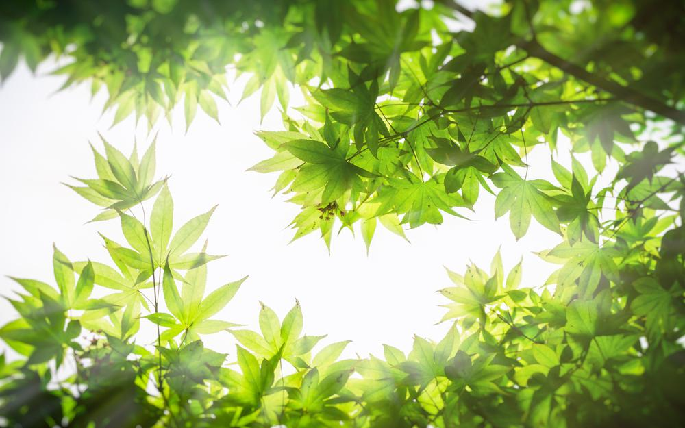 Green leaf eye protection 2k hd computer wallpaper