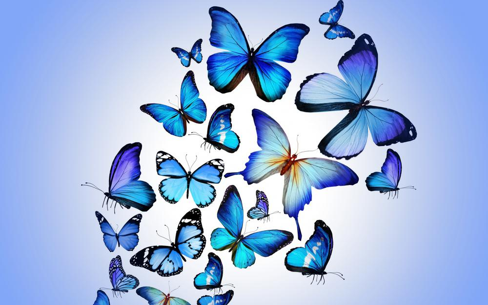 Blue, animated, butterfly