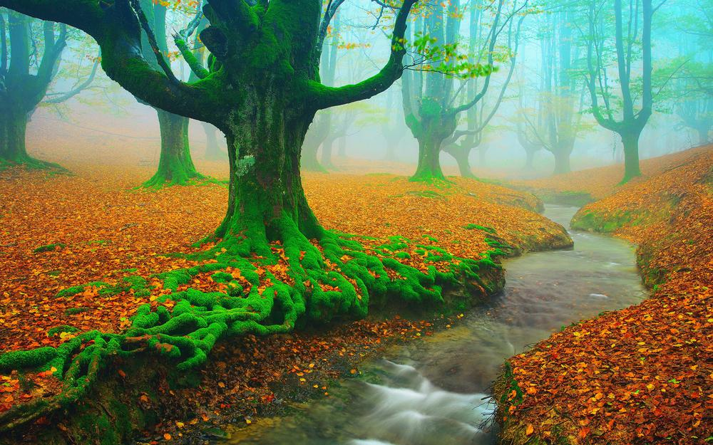Moss, leaves, trees, river, creek, autumn landscape desktop wallpaper