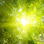Sunshine forest landscape desktop wallpaper