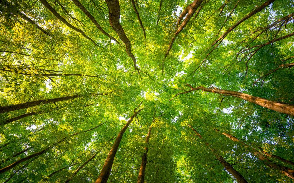 Forest, trees, branches, leaves, morning sun, green eye protection landscape wallpaper