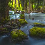 Natural scenery, trees, rocks, moss, running water, desktop wallpaper