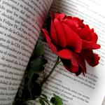 Red, flowers, flower, red rose, bud