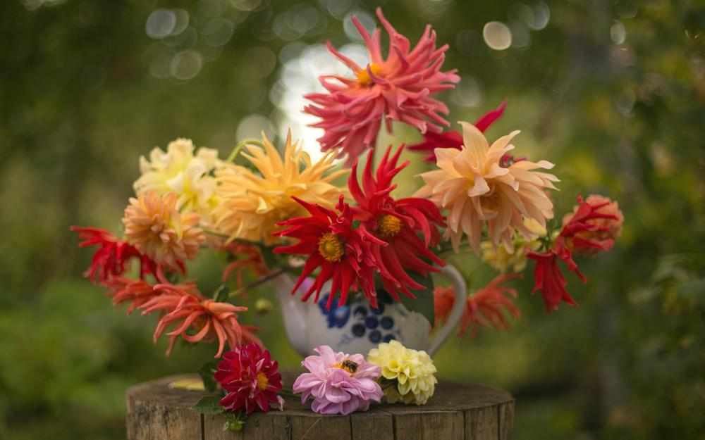 Dahlias, bouquet, autumn