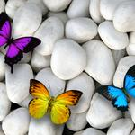 Butterflies, design by marika, white stones, colorful