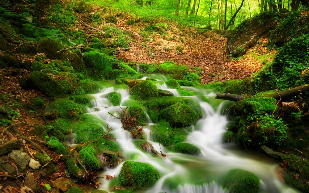 Nature forest trees river tree creek landscape 2k desktop wallpaper
