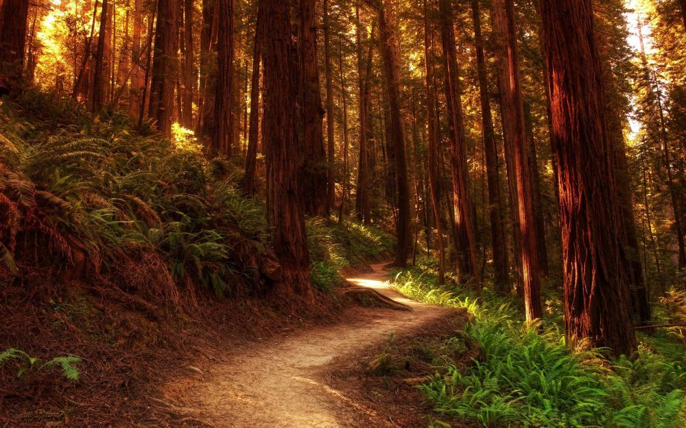 Path in the forest hd wallpaper