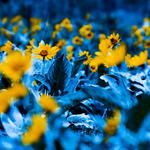 Plants, gardens, photography, nature, flowers