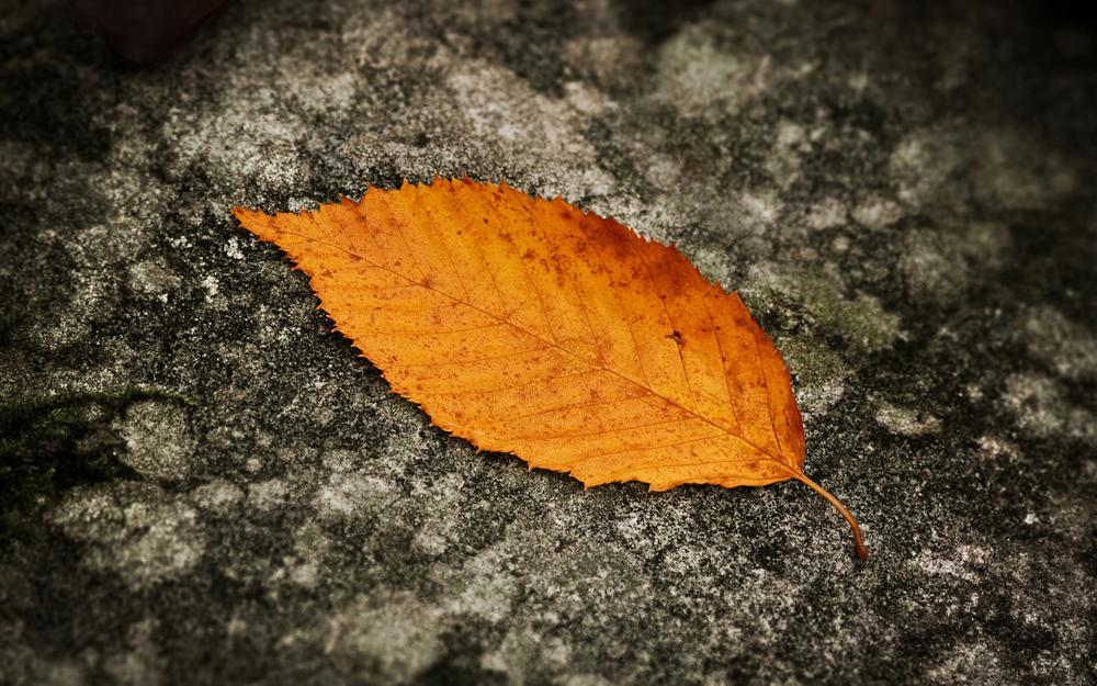 Leaf on the asphalt desktop wallpaper