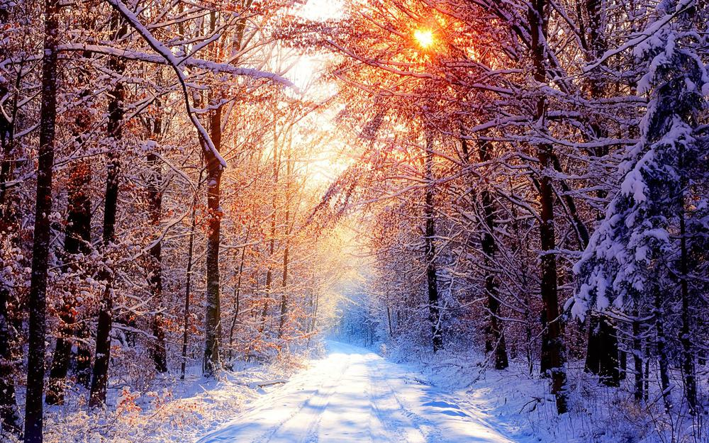 Forest snowy road wallpaper