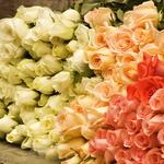 White-yellow-red bouquet of roses