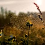 Grass, morning, macro, sun, cobweb, light, field