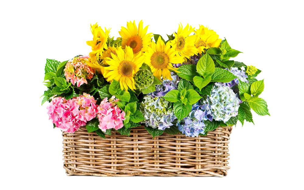 Hydrangea, basket, flowers, yellow