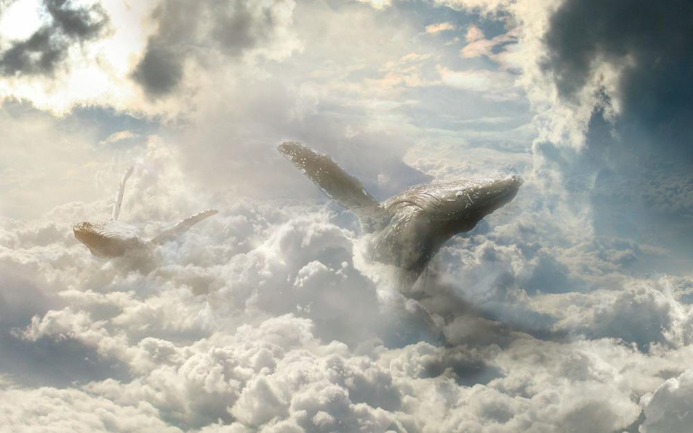 Atmosphere, whales, fiction, battlefire, fantasy, swimming through air layers, art, sky, pyruetics, animals, clouds, heavens, clouds