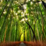 Japan kyoto bamboo forest trail landscape wallpaper
