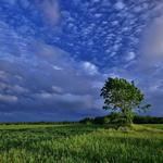 Clouds, nature, tree, field