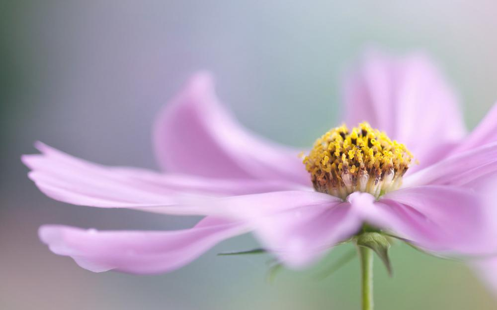 Flower with pink leaves hd wallpaper
