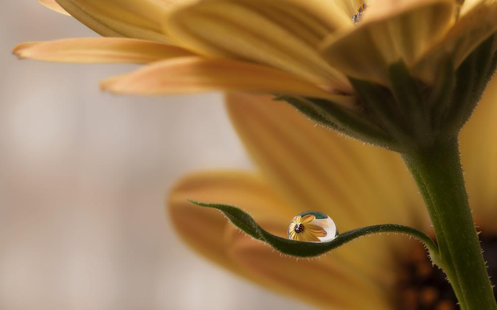 Flower with dew droplets wallpaper