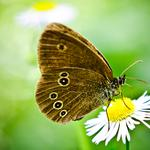 Color, butterfly, green, background