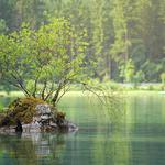 Green forest lake nature landscape eye wallpaper