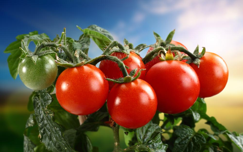 Tomatoes, vegetables, tomatoes