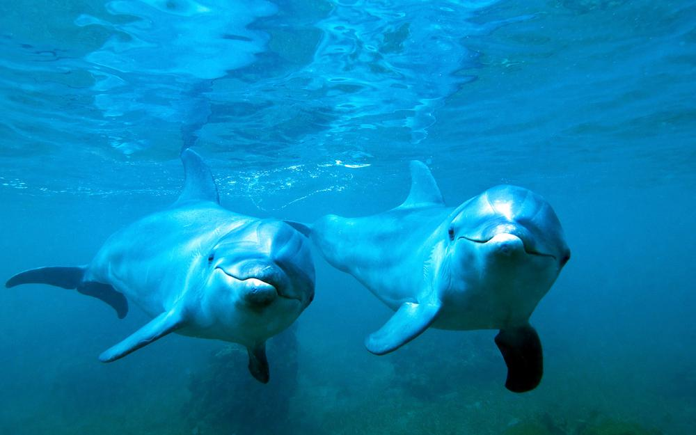 Dolphins, water