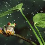 Leaves, nature, water, animals, frog, splash, stems, drops