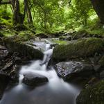 Forest tree stream stone moss natural green landscape wallpaper