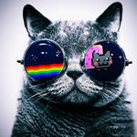 Cat, glasses, nyan cat