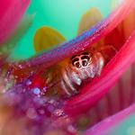 Nature insect spider animals wallpaper